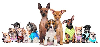 Pet Taxi USA: Nationwide Pet Delivery Service